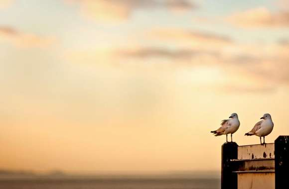 Seagulls wallpapers hd quality
