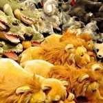 Stuffed Animal wallpapers hd