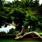 Twisted Tree image