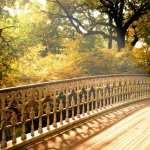Bridge free download