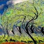 Twisted Tree hd desktop