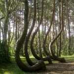 Twisted Tree desktop wallpaper