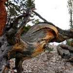 Twisted Tree 1080p