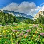 Meadow free wallpapers