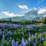 Mount Rainier hd pics