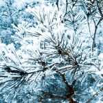 Pine Tree hd wallpaper