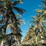 Tropical hd pics