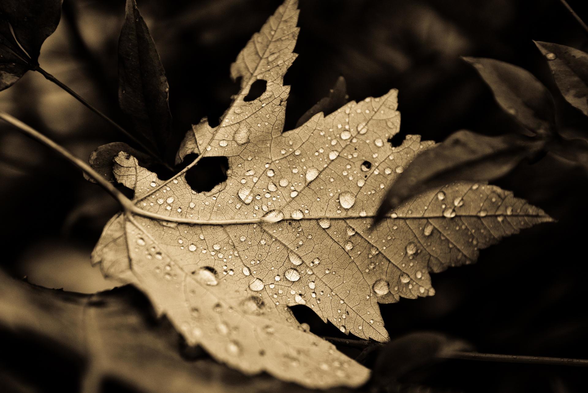 Листья в каплях загрузить