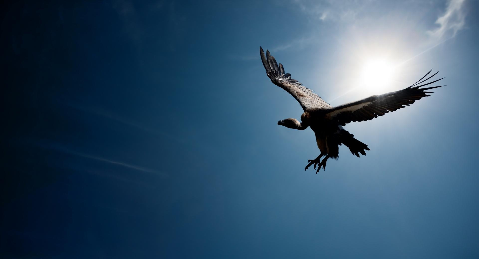 Bird In The Sky Sun wallpapers HD quality