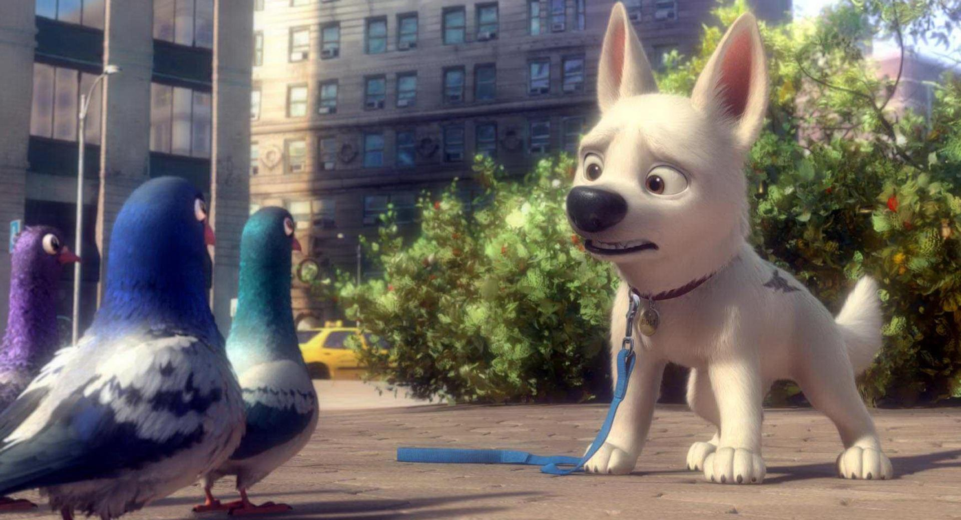 Bolt And Pigeons wallpapers HD quality