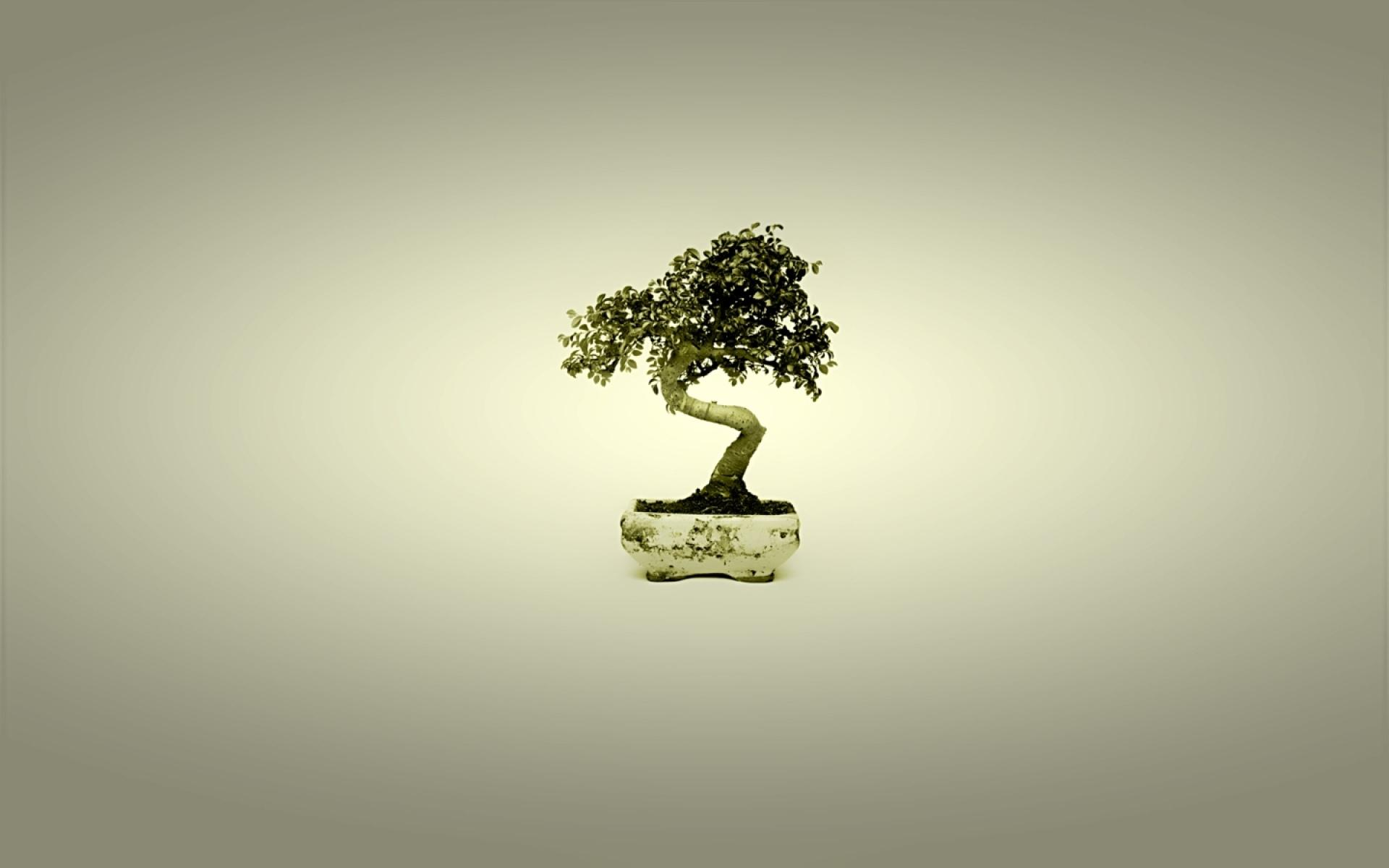 Bonsai wallpapers HD quality