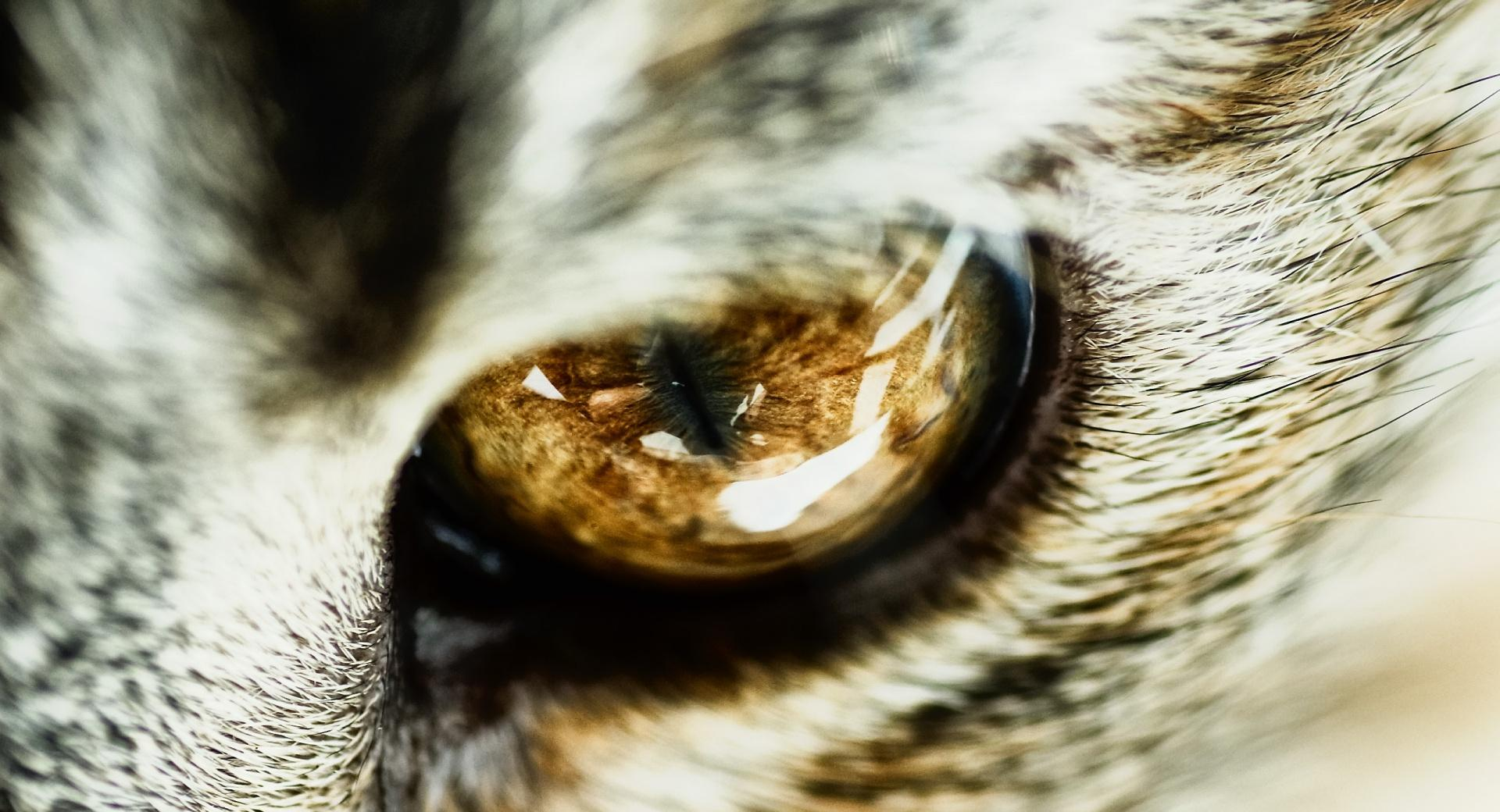 Cat Eye Close Up wallpapers HD quality