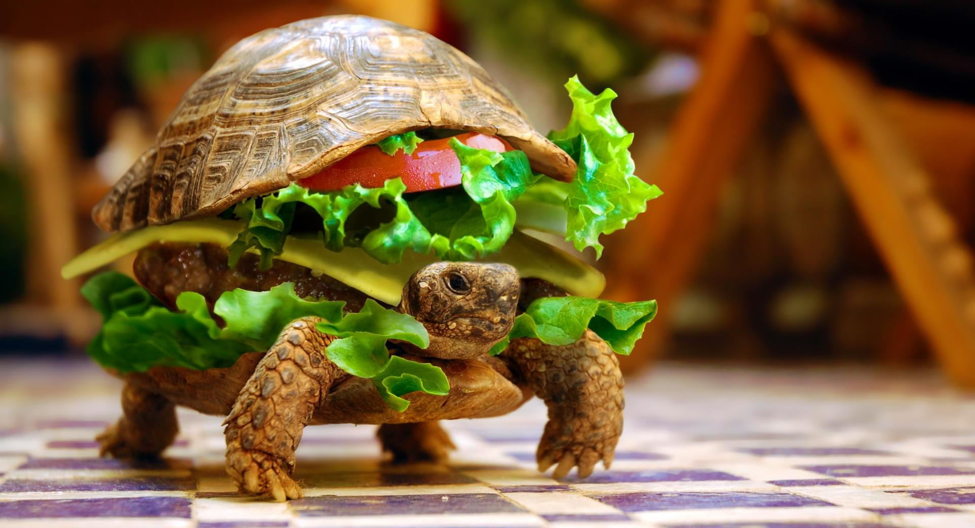 Cheese Turtle Burger By K23 wallpapers HD quality