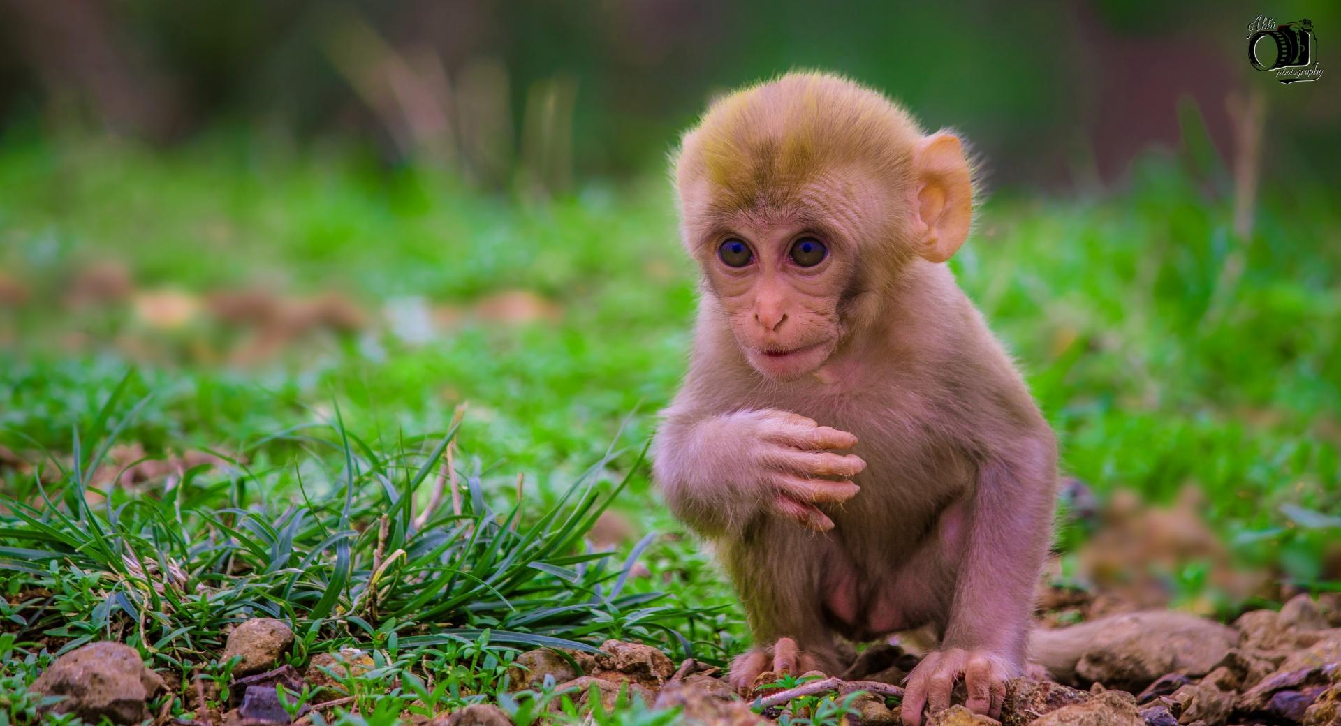 Cute Baby Monkey wallpapers HD quality