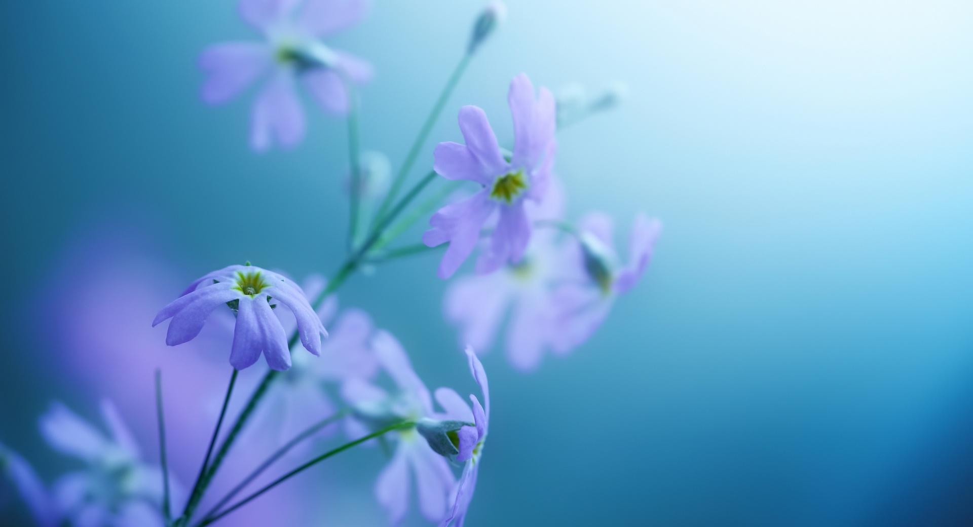 Delicate Violet Flowers wallpapers HD quality