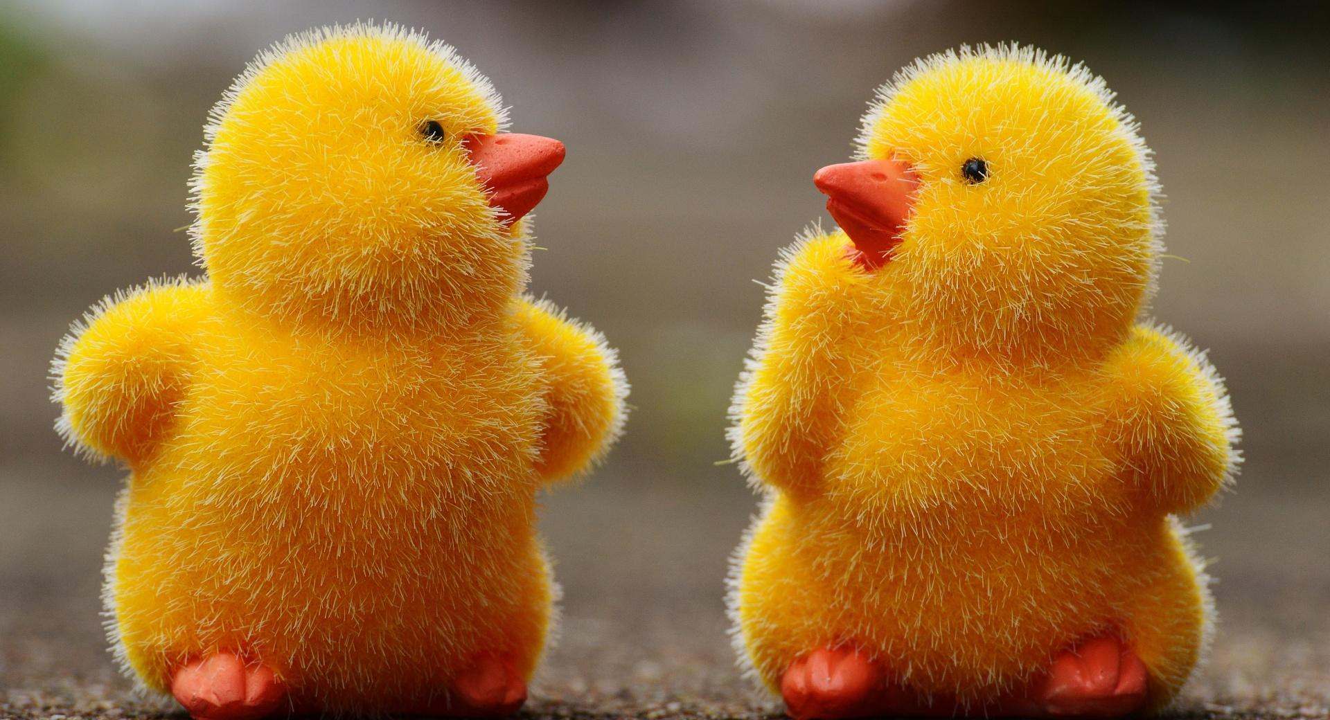Easter Baby Chicks wallpapers HD quality