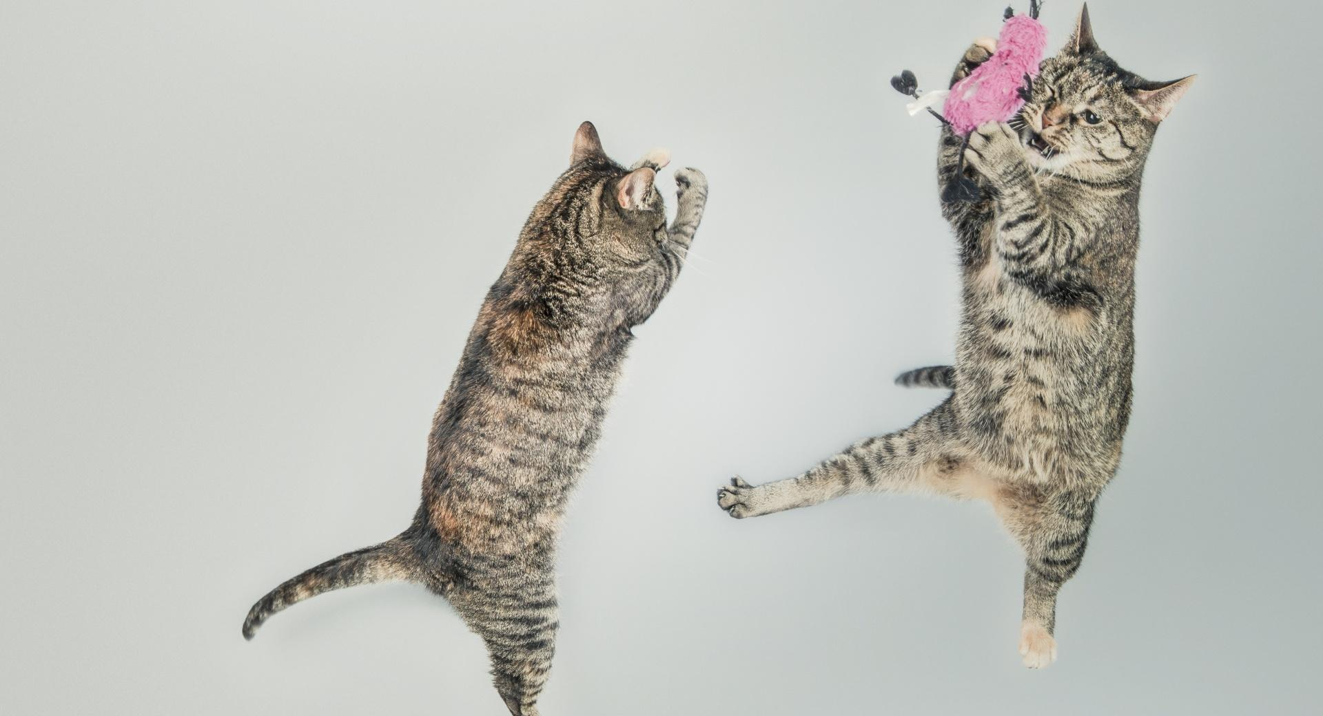 Funny Cats wallpapers HD quality