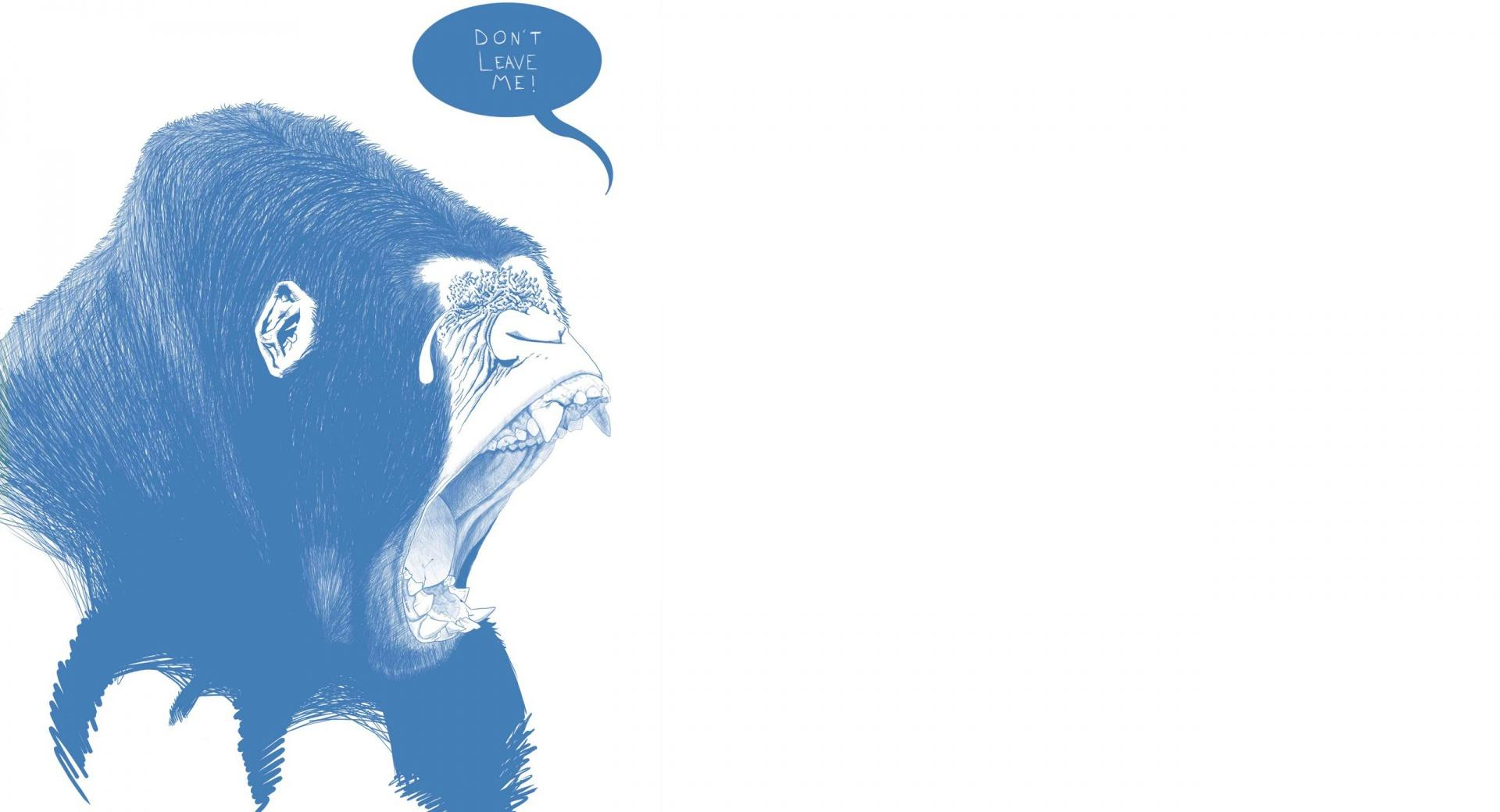 Funny Gorilla wallpapers HD quality