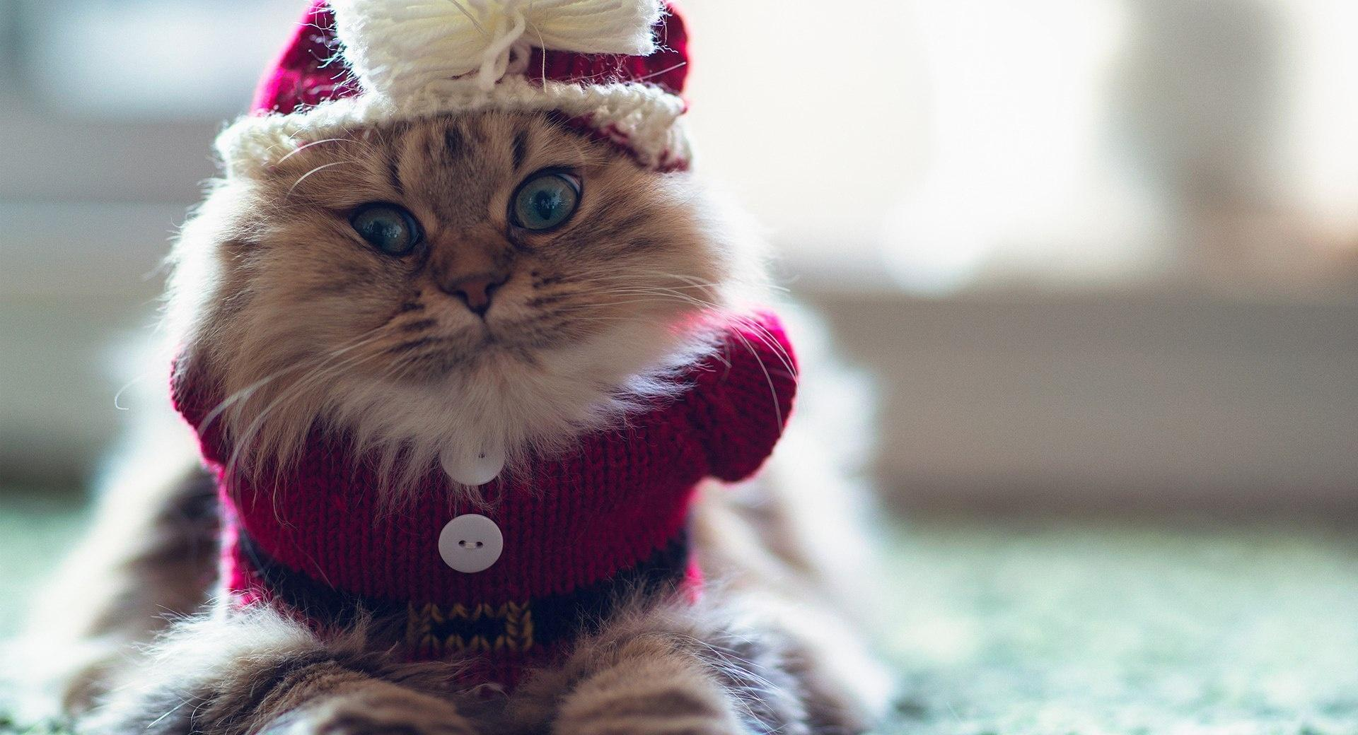 Funny Kitty wallpapers HD quality