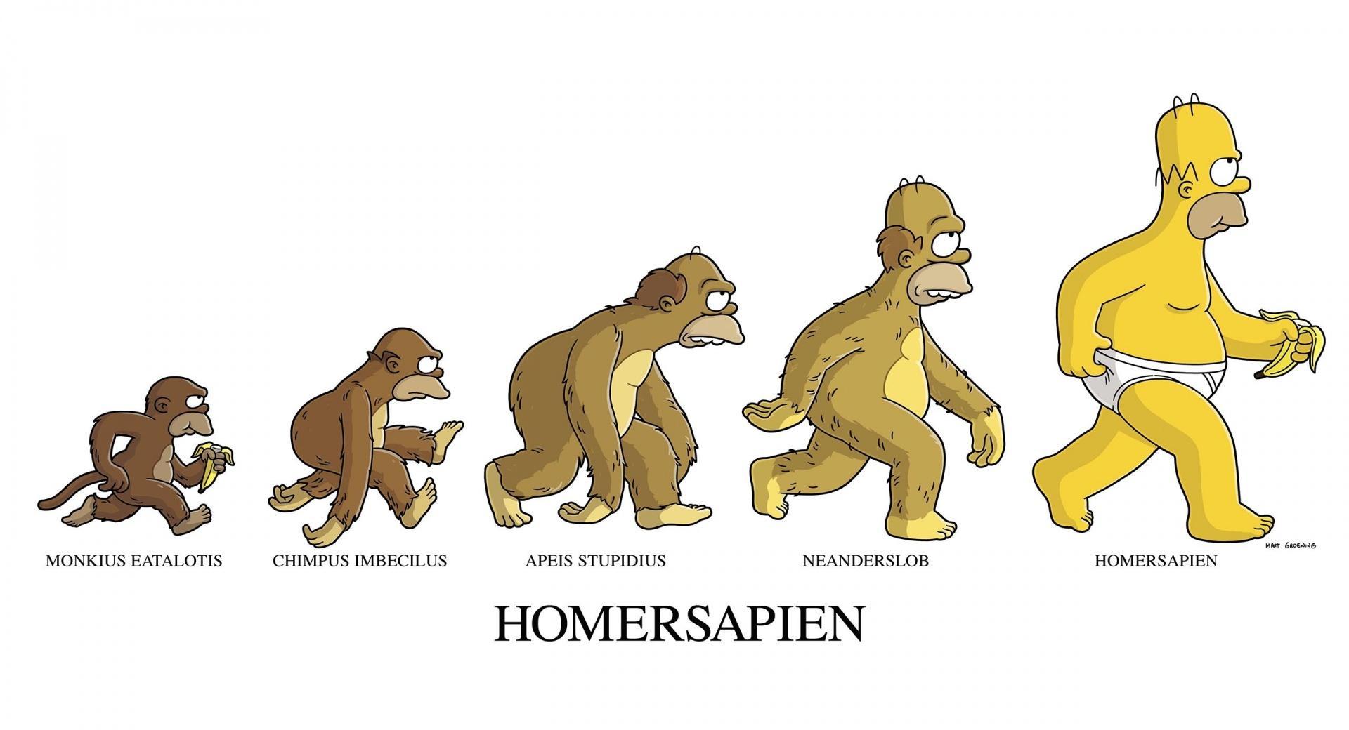 Homersapien wallpapers HD quality