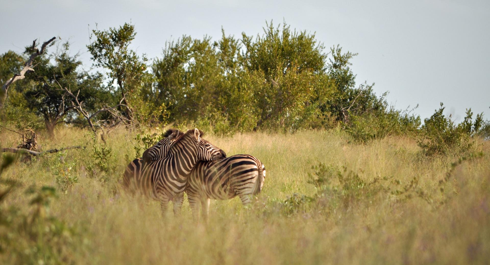 Kruger National Park wallpapers HD quality