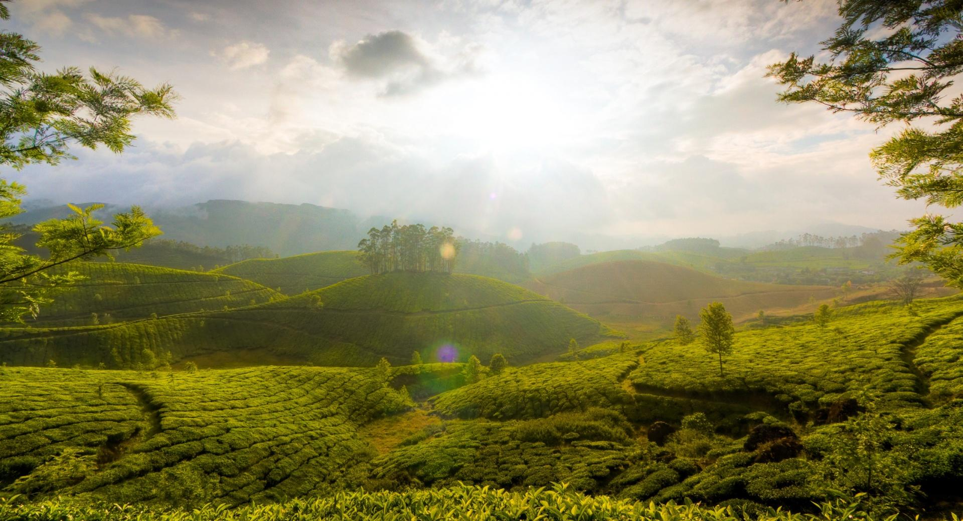 Munnar Hill, India wallpapers HD quality