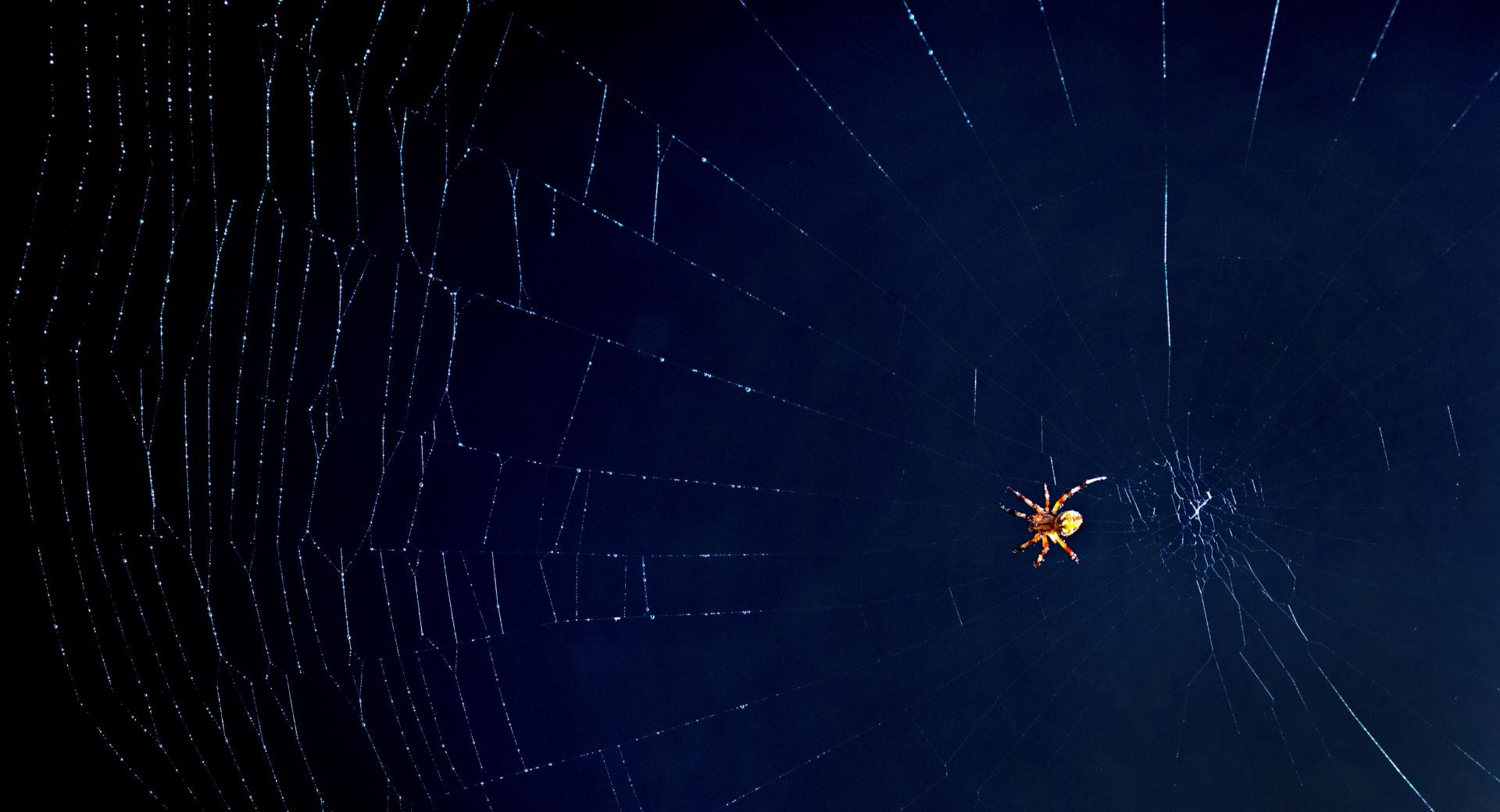 Oh What A Tangled Web We Weave wallpapers HD quality