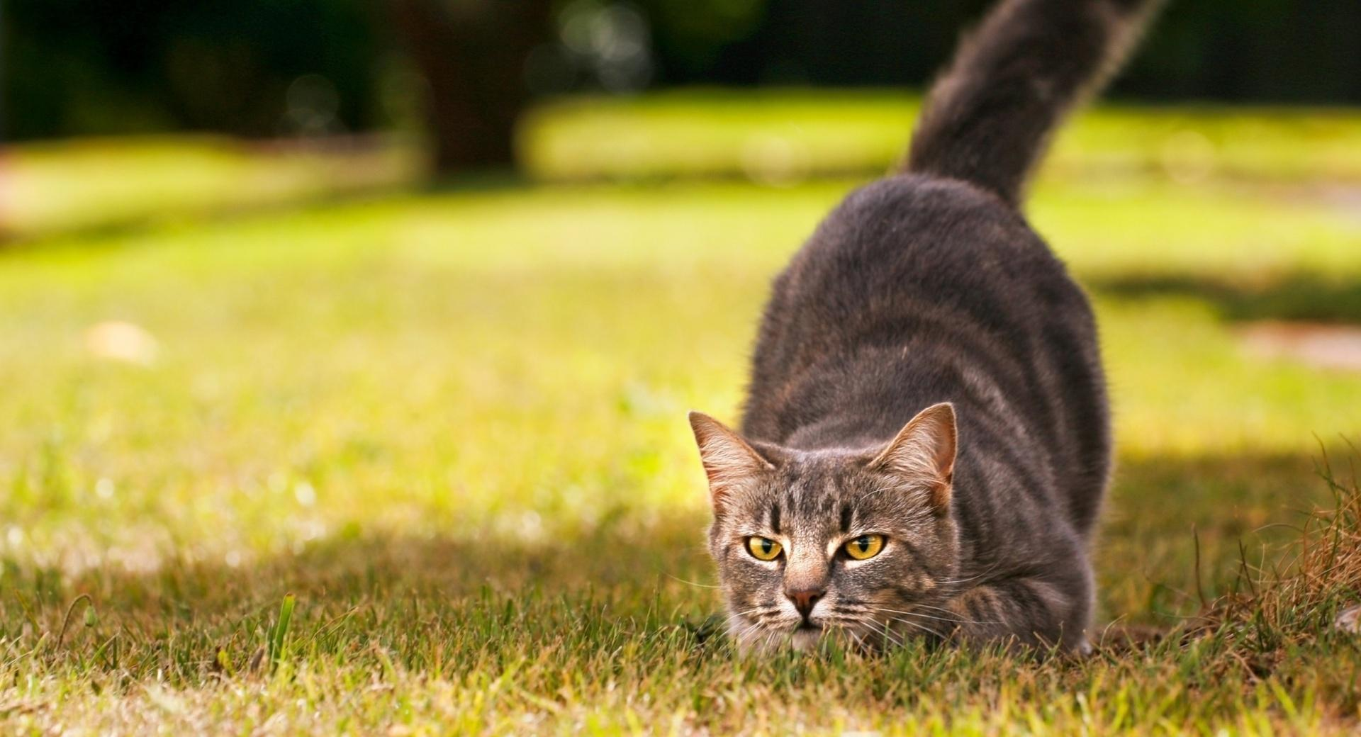 Playful Cat wallpapers HD quality