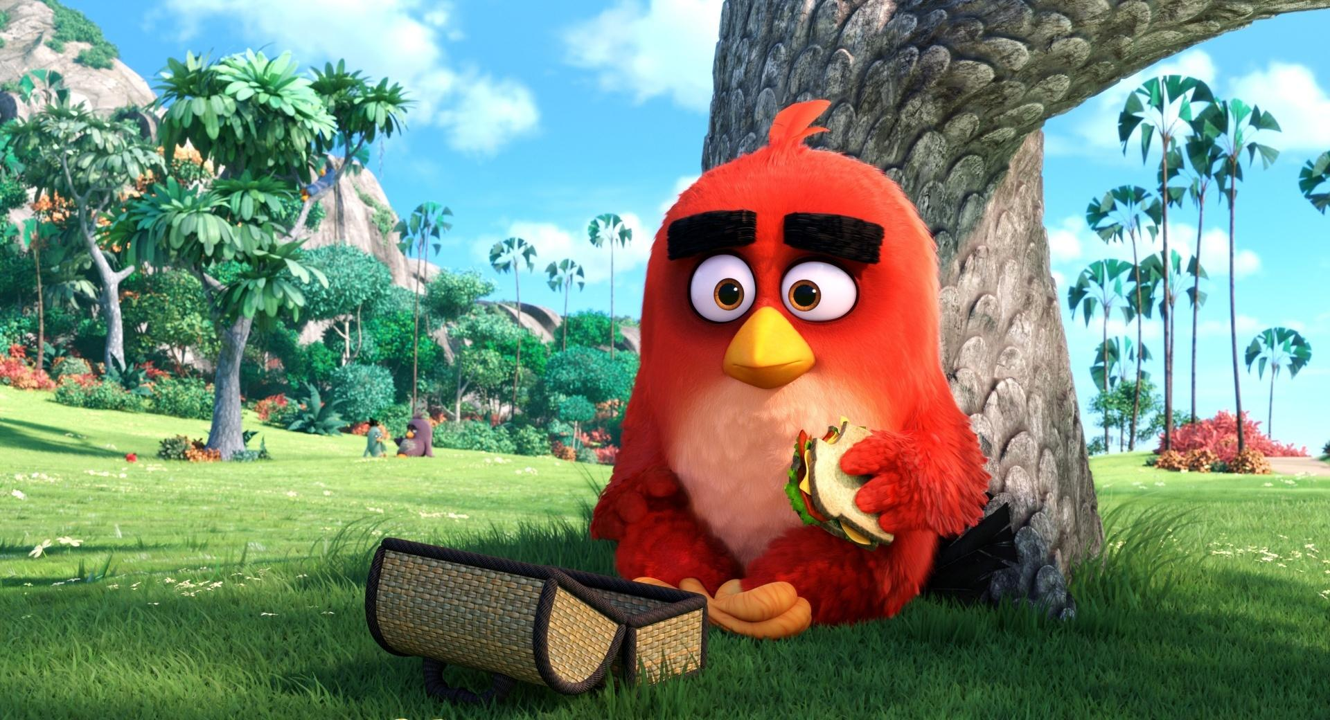 Red Angry Birds Movie wallpapers HD quality