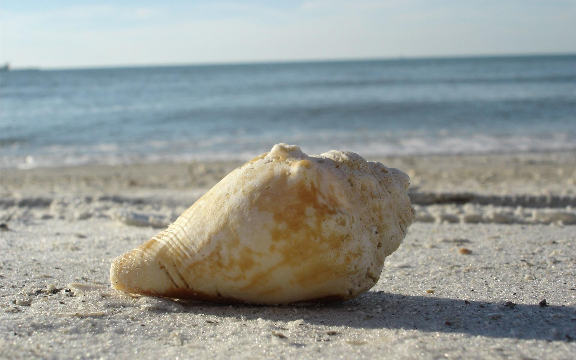 Shell wallpapers HD quality