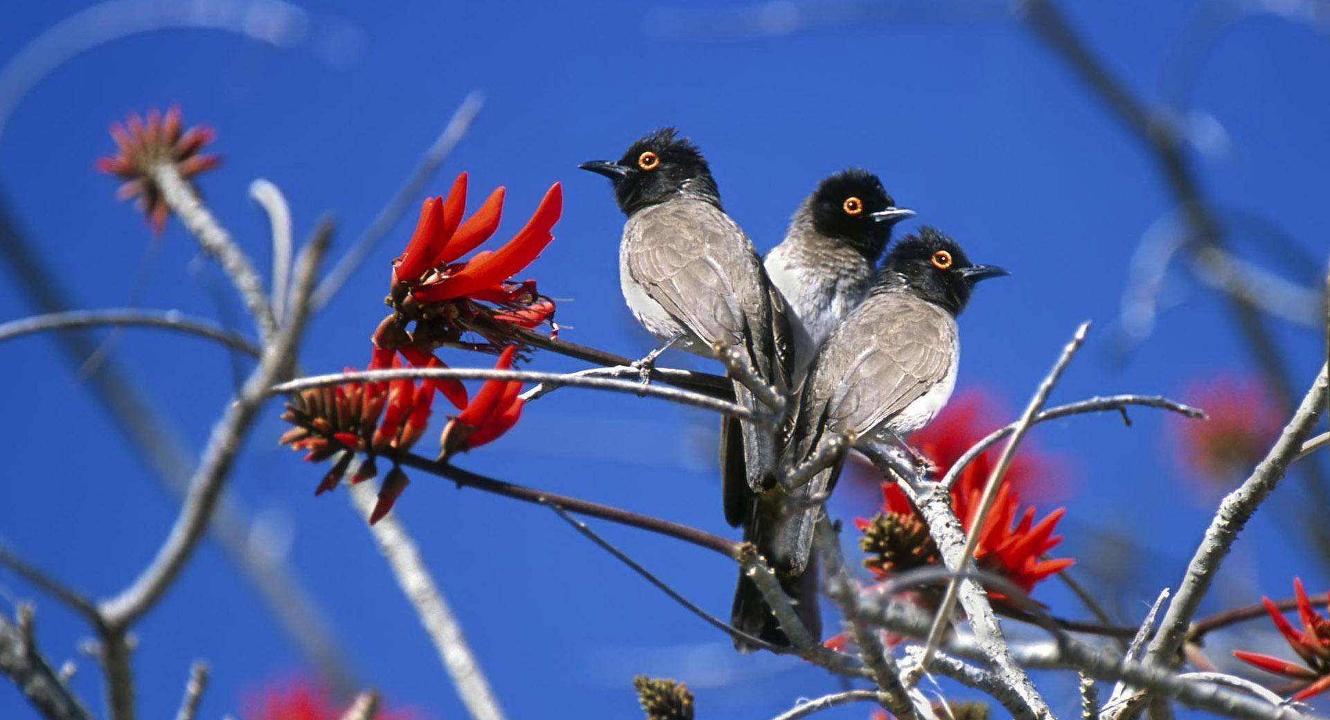 Three Birds Etosha National Park Namibia wallpapers HD quality