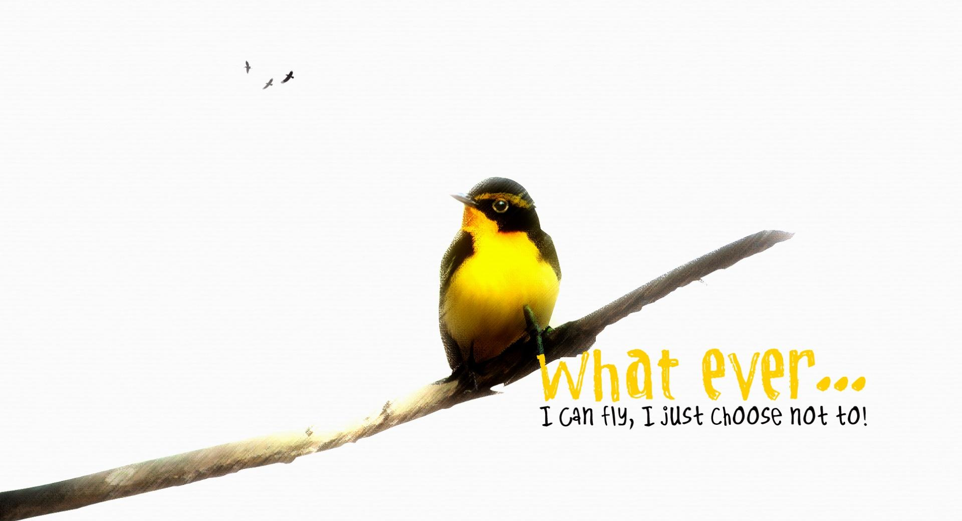What Ever! wallpapers HD quality