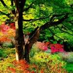 Japanese Garden hd photos