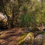 Moss hd pics