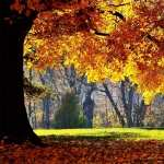 Fall widescreen