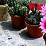 Cactus pic