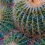 Cactus new wallpapers
