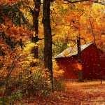 Fall hd pics
