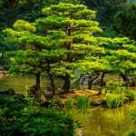 Japanese Garden full hd