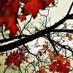 Leaf free download