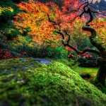 Japanese Garden free wallpapers
