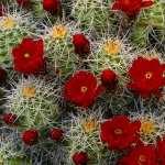 Cactus wallpapers hd