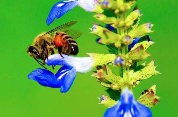 Bee, Ant, Blue Flower