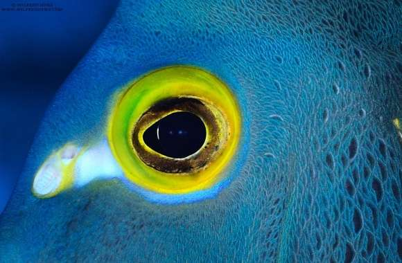 Blue Fish with Yellow Eyes