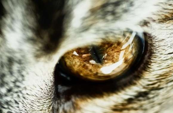 Cat Eye Close Up