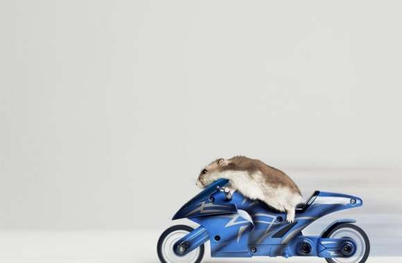 Mouse Riding Motorcycle wallpapers hd quality