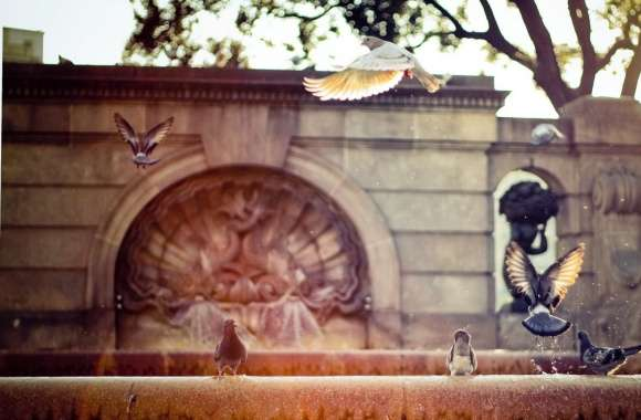 Pigeons On A Fountain