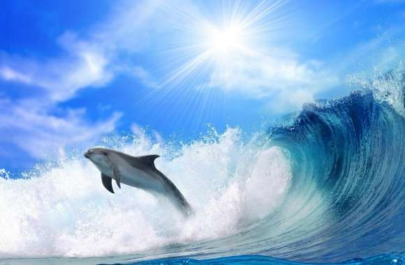 Playing Dolphin wallpapers hd quality