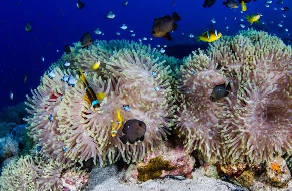 Scuba Diving Coral Reef