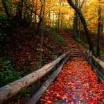 Fall full hd